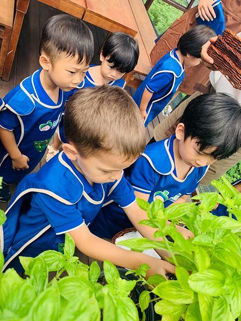 Trường Mầm Non Montessori IMA - Thảo Điền