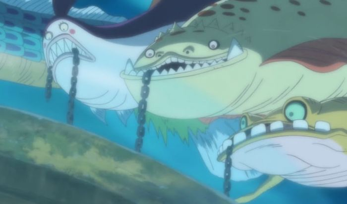 Fakta Sea Kings