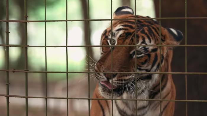 Review Tiger King Netflix