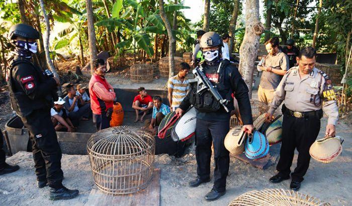 Judi sabung ayam yang marak di Indonesia.