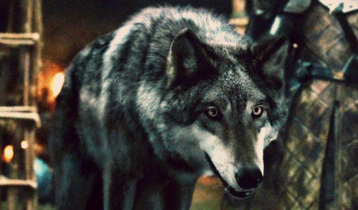 Direwolf sempat diangkat di serial Game of Thrones sebagai simbol keluarga Stark.