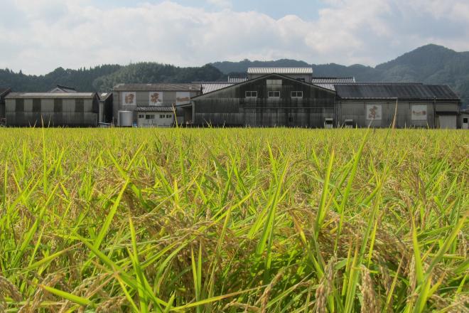 Gochoda Brewery with their own Yamadanishiki rice field (1)