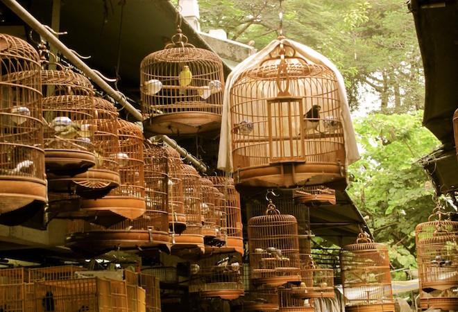 bird garden