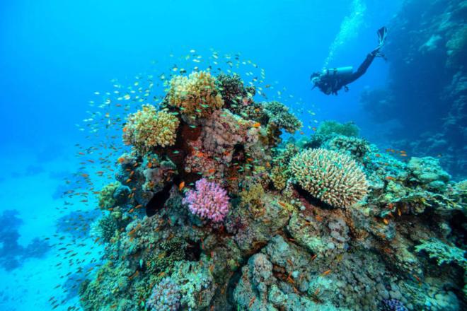 scuba-diving-localiiz