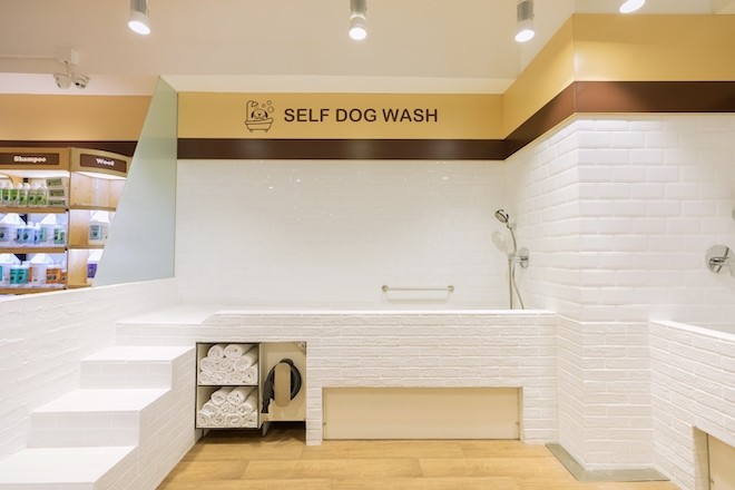 whiskers n paws dog groomers hong kong