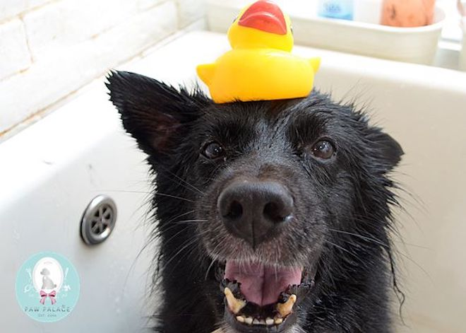 paw palace dog groomers hong kong