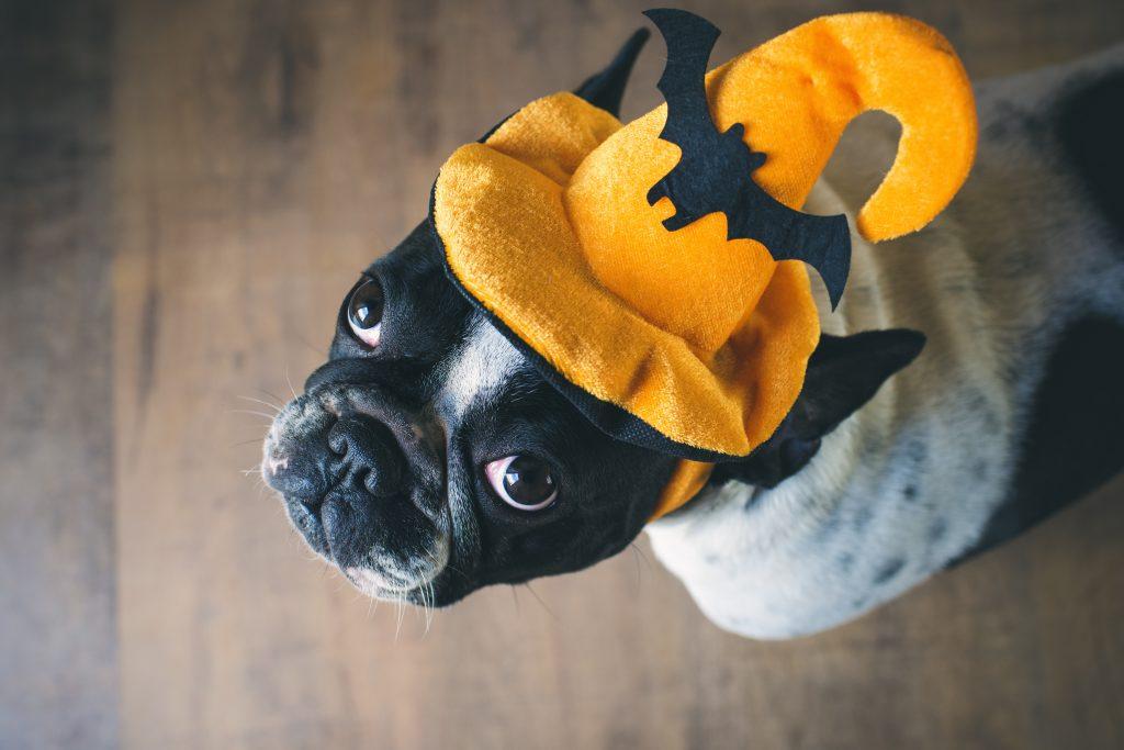 Stazione Novella Doggy Halloween Brunch