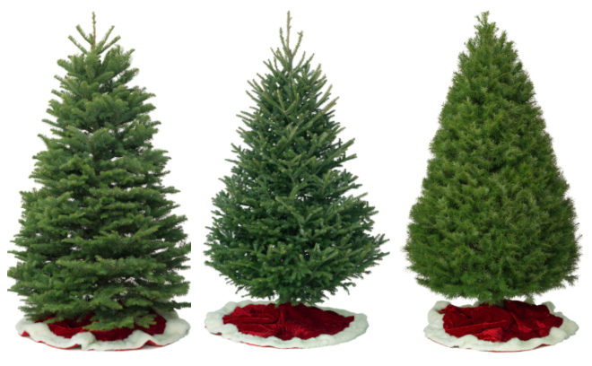 Sophie's Christmas Trees