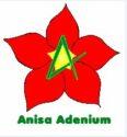 Anisa Adenium Nursery