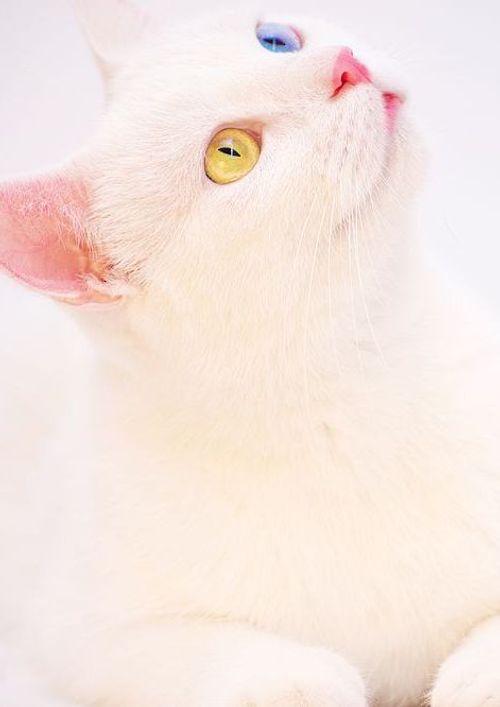 หน้าปกนิยาย เรื่อง อยากดวงดีบ้าง เลยเกิดใหม่เป็นแมวนำโชค