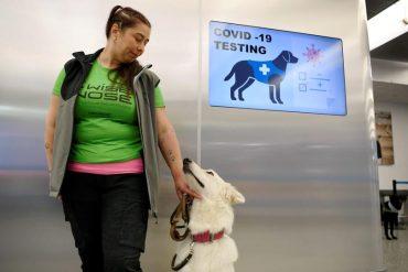 สุนัขดมหาโควิด-19 ที่ฟินแลนด์