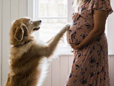 สุนัขดมได้ว่าเราท้องจริงเหรอ
