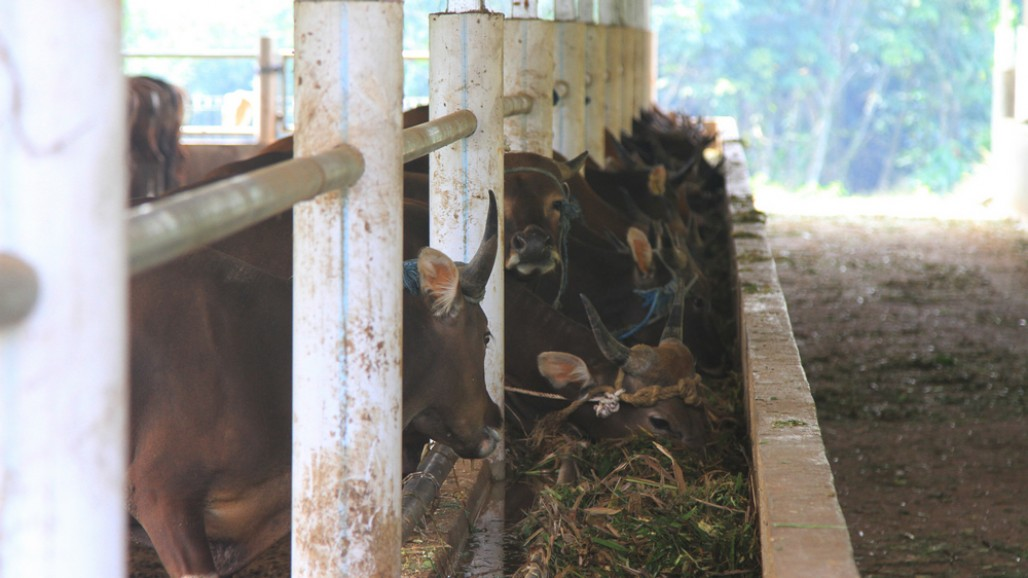 Ensuring the Availability of Sacrificial Animals amid Pandemic' photo