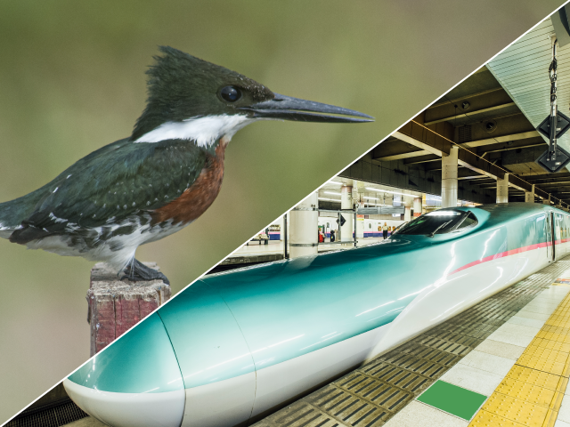 Japan's Shinkansen trains (bullet trains) draw its inspiration from kingfishers. The front cabin of these bullet trains resemble the beak of a kingfisher bird.