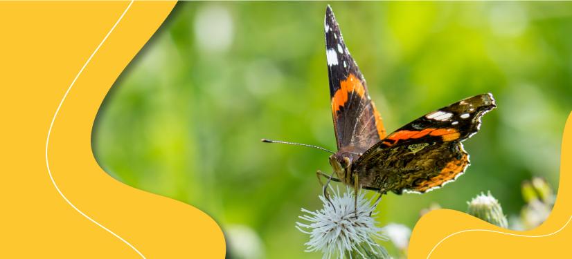 How do butterflies fly?
