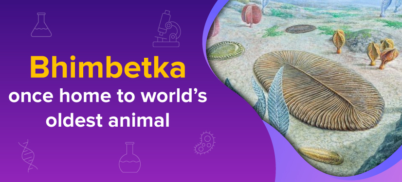Dickinsonia fossil found in Bhimbetka