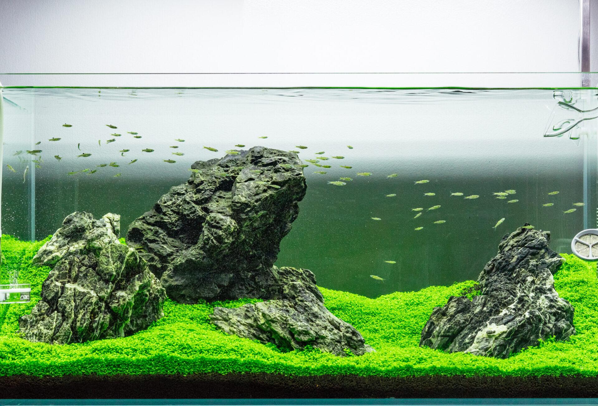 Nghệ thuật thiết kế hồ thủy sinh theo phong cách Iwagumi