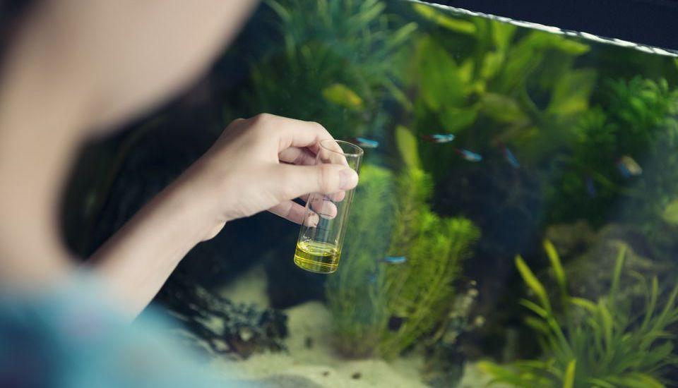 Cách sử dụng phân bón cho hồ thủy sinh