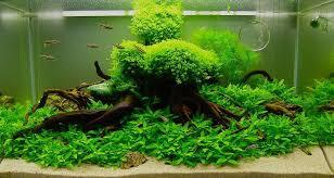 Dinh dưỡng cho cây trồng thủy sinh không nên bỏ lỡ