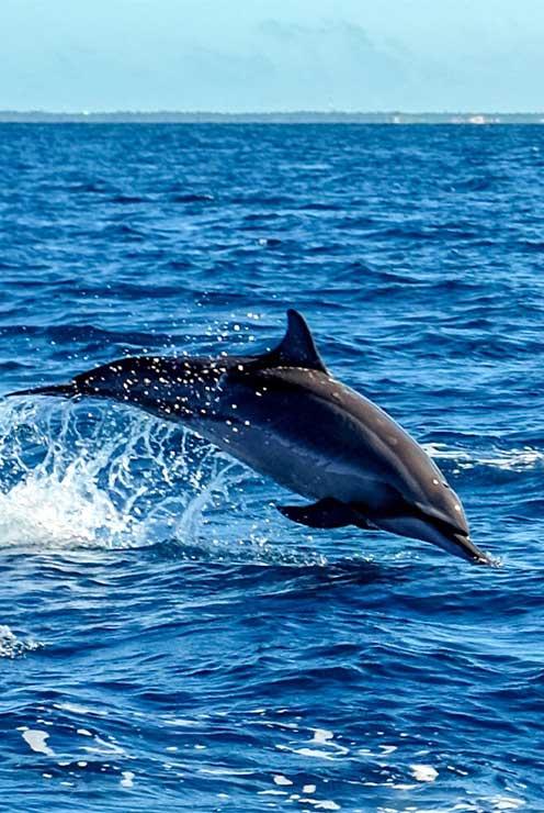mirissa beach dolphin watching toursrilankatravel