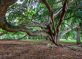 Kandy Royal botanical Park