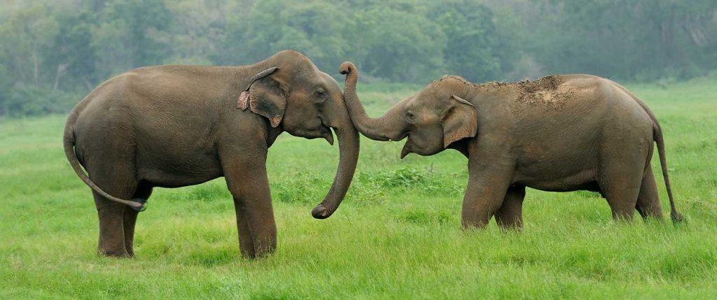 Feature Elephant