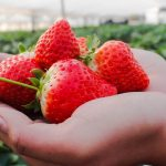 Stawberry Farm Feature