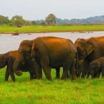 Feature-Elephant