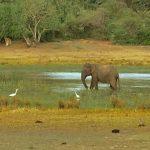 Wilpattu Park Feature