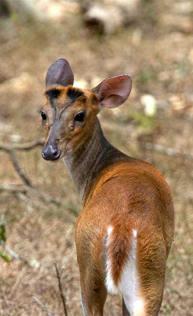 yala national park animals animals