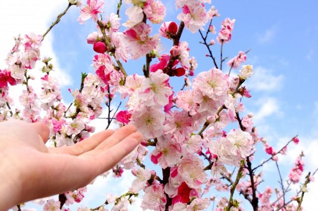 Manner Hanami: Ketahui Aturan Menikmati Bunga Sakura Pada Musim Semi di  Jepang | WeXpats Guide