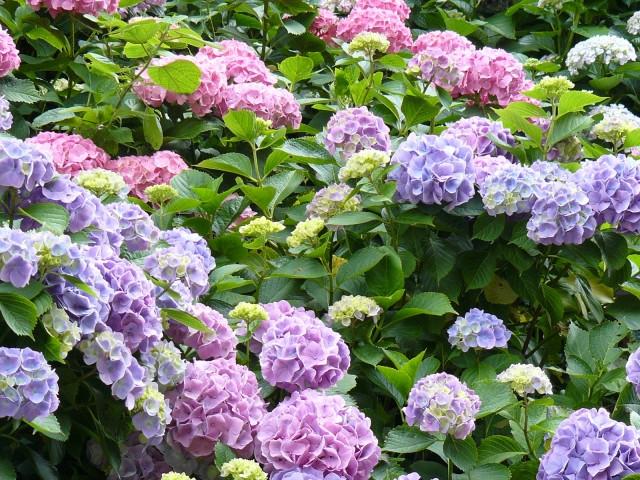 Inilah Beberapa Jenis Bunga Khas Jepang Yang Mempercantik Musim Semi Wexpats Guide