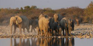 feature image your safari