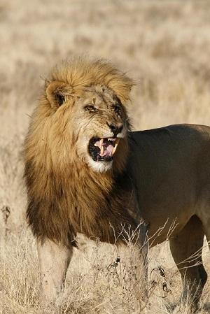 customer story - your safari
