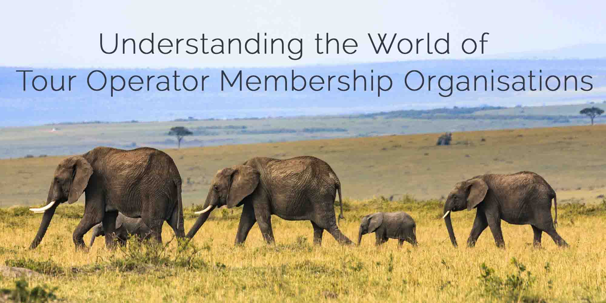 Which Travel Association Should I Join?