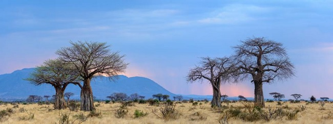 African tour operator software